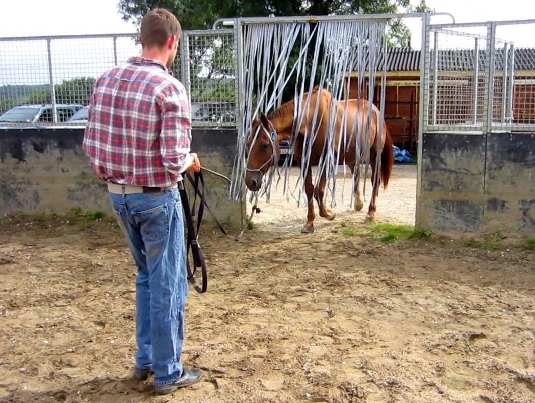 My Safe Cobs Course GRASS ROOTS HORSEMANSHIP