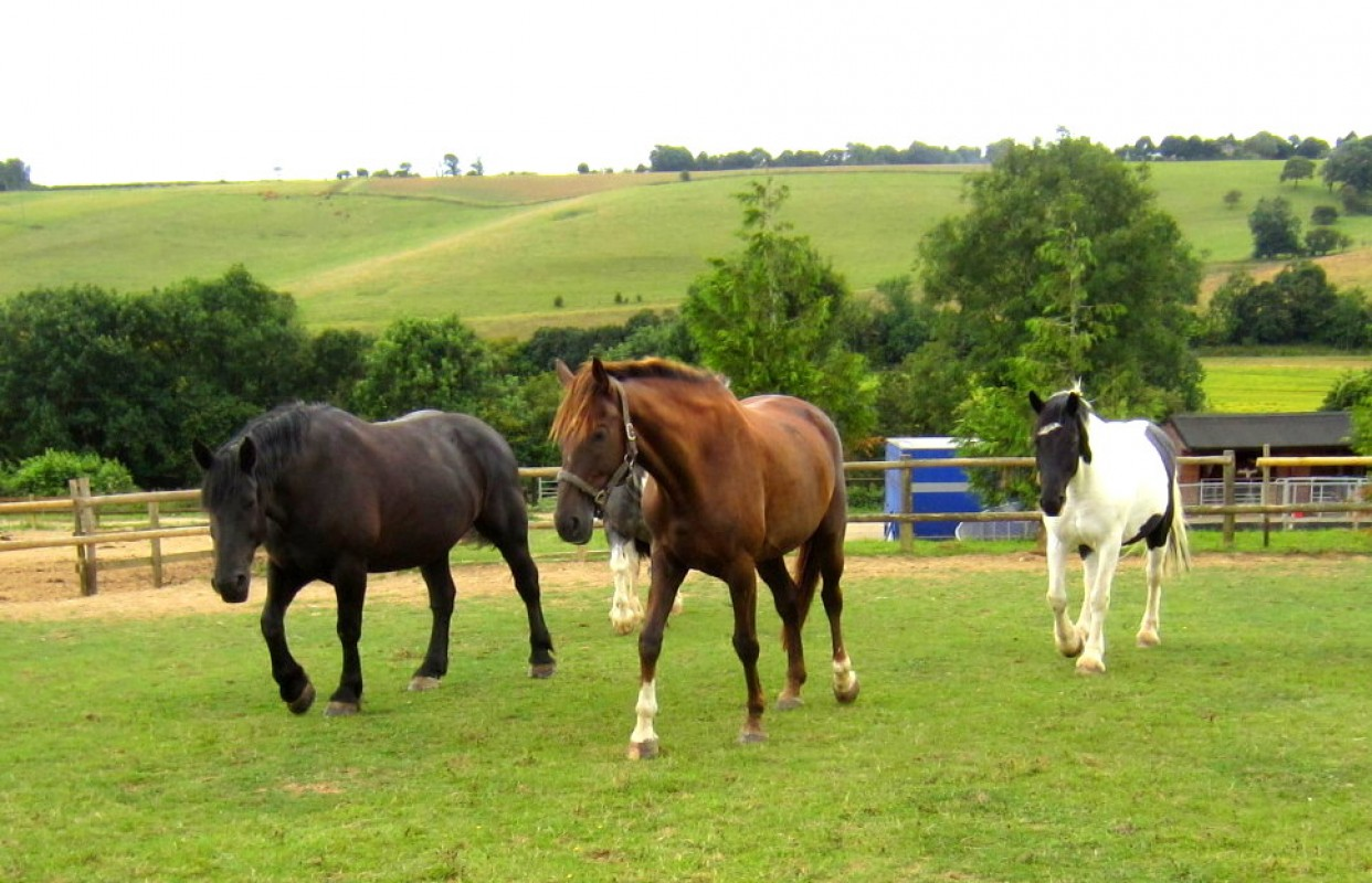 My Safe Cobs Course LESSONS FROM THE HERD: Camping with horses